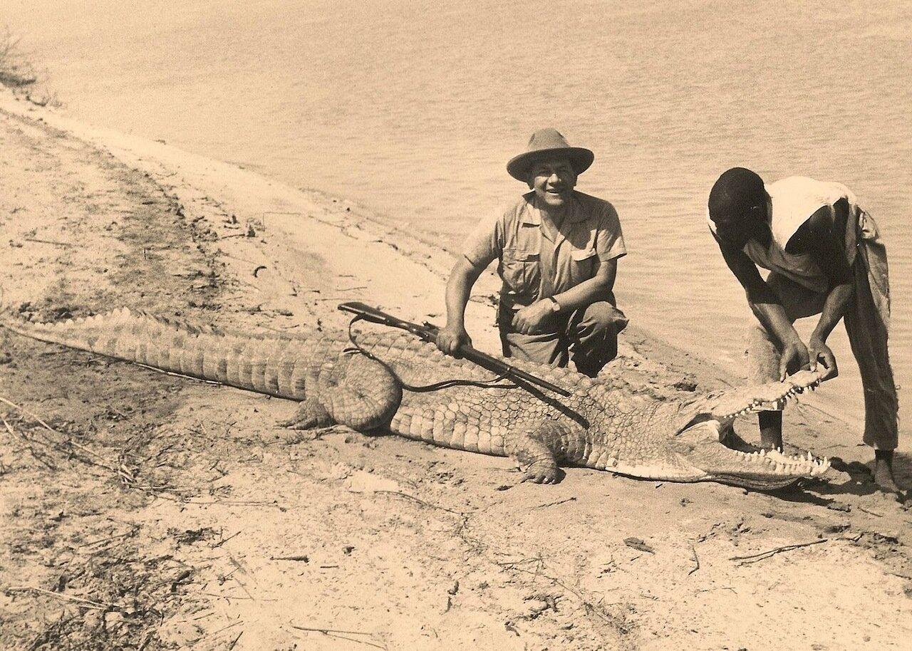 24. Поверженный крокодил