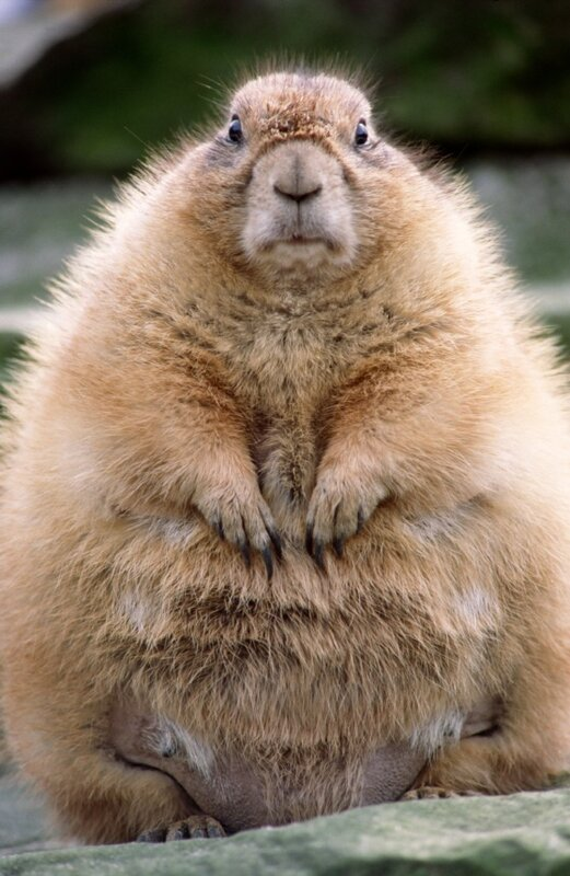 Groundhog Day.