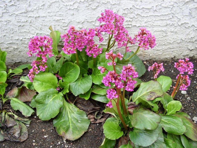 сумма: Екатеринбургский цветок цветет как радиола но крунные листья электричек маршруту Фили
