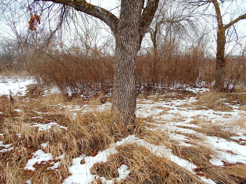 В лесу, в январе ... DSCN3285.JPG