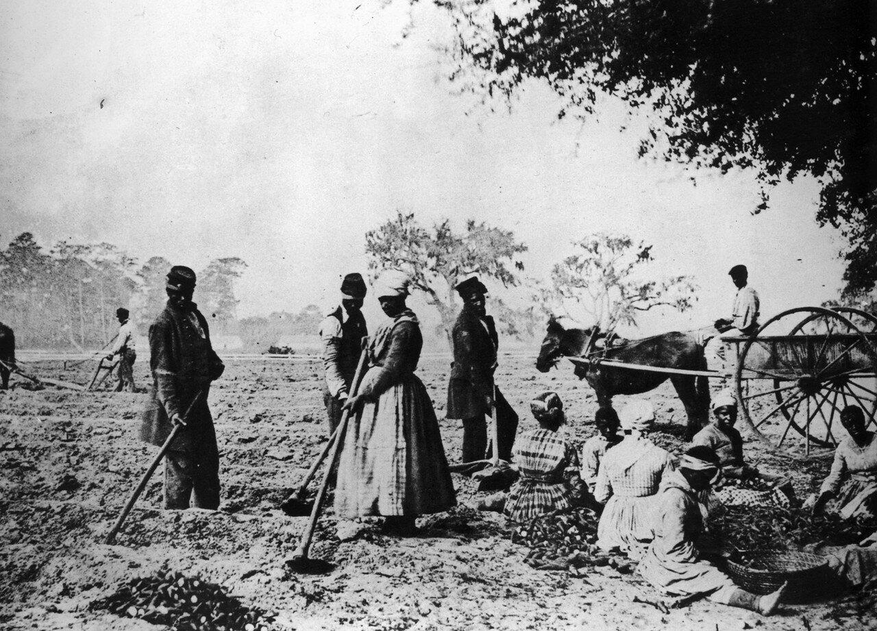 1862. Рабы сажают картофель