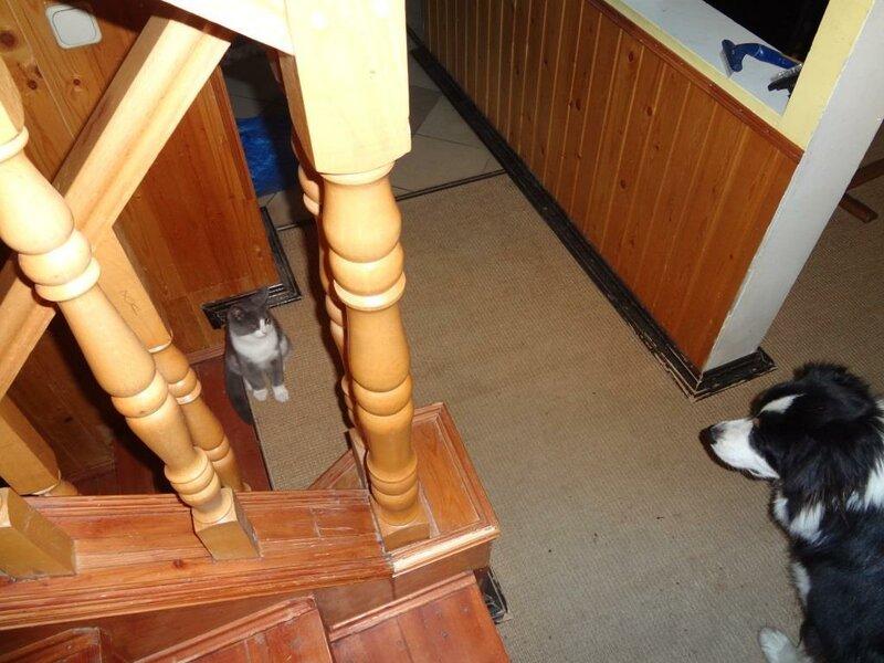 Кому коты? 0_167741_780d6702_XL