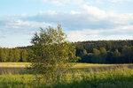 В поле возле Абрамцево перед закатом