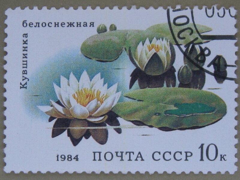 Кувшинка белоснежная (Nymphaea candida).