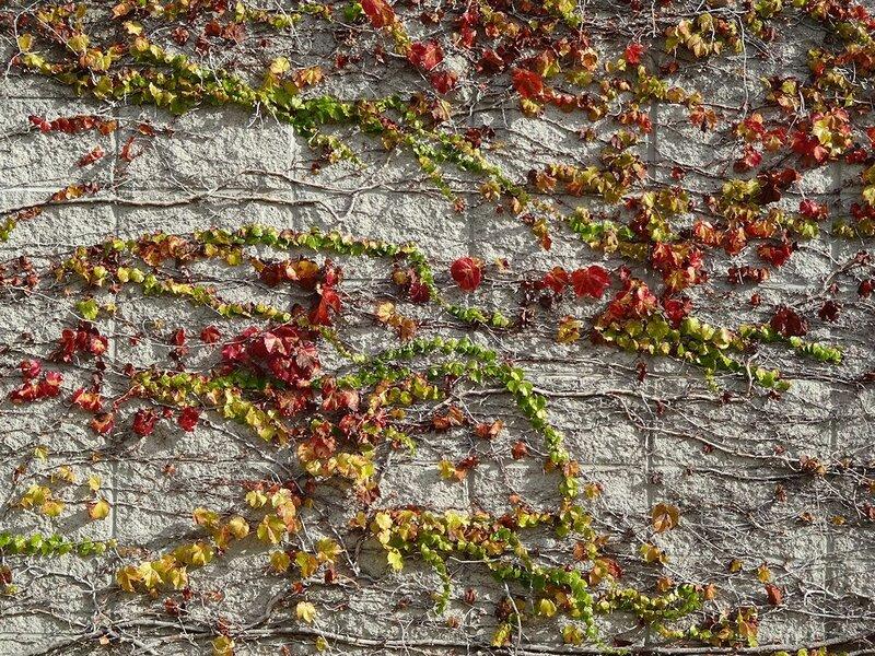 Осень на стене