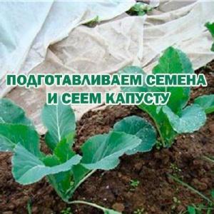 Книга Подготавливаем семена и сеем капусту (2015) WebRip