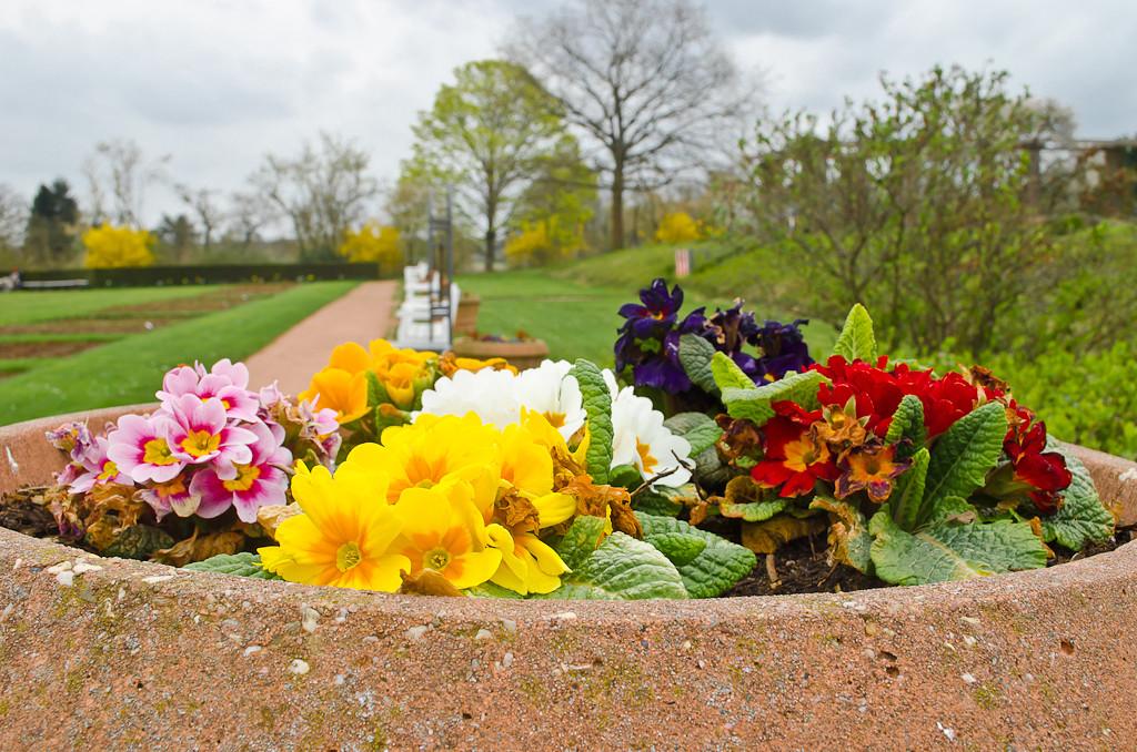 18. Весенние цветные брызги. Учимся фотографировать цветы на зеркалку Nikon D5100 KIT 18-55