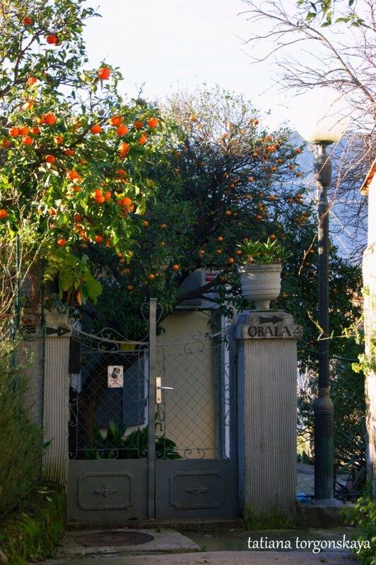 Уютный домик с апельсиновым садом