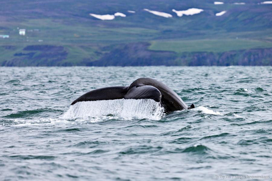1. Дороги Нордюрланда и киты залива Скъяльфанди.