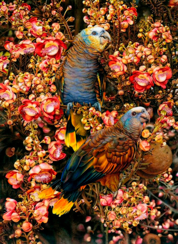 птицы Хайди Уиллис