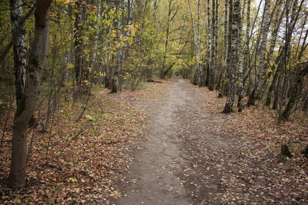 Лес в Ясенево