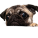Dogs-cookies-1280x1280.png