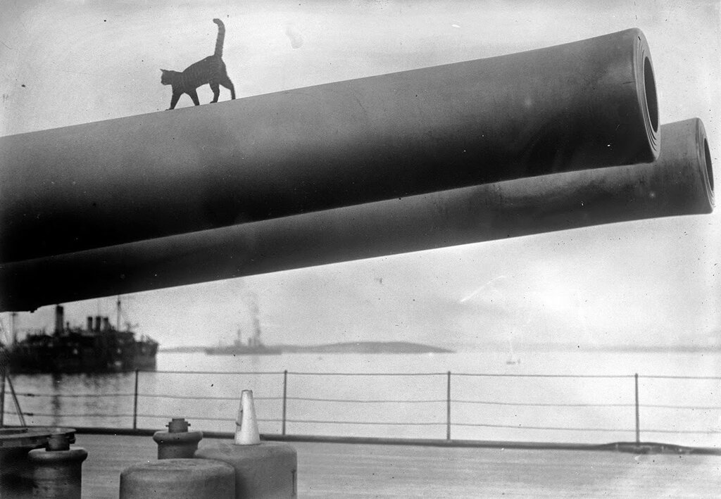 A cat, the mascot of the HMS Queen Elizabeth, walks along the barrel of a 15-inch gun on deck, in 1915