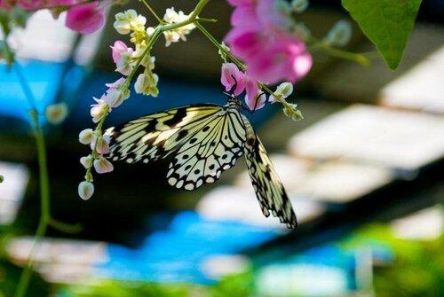 сад бабочек.jpg