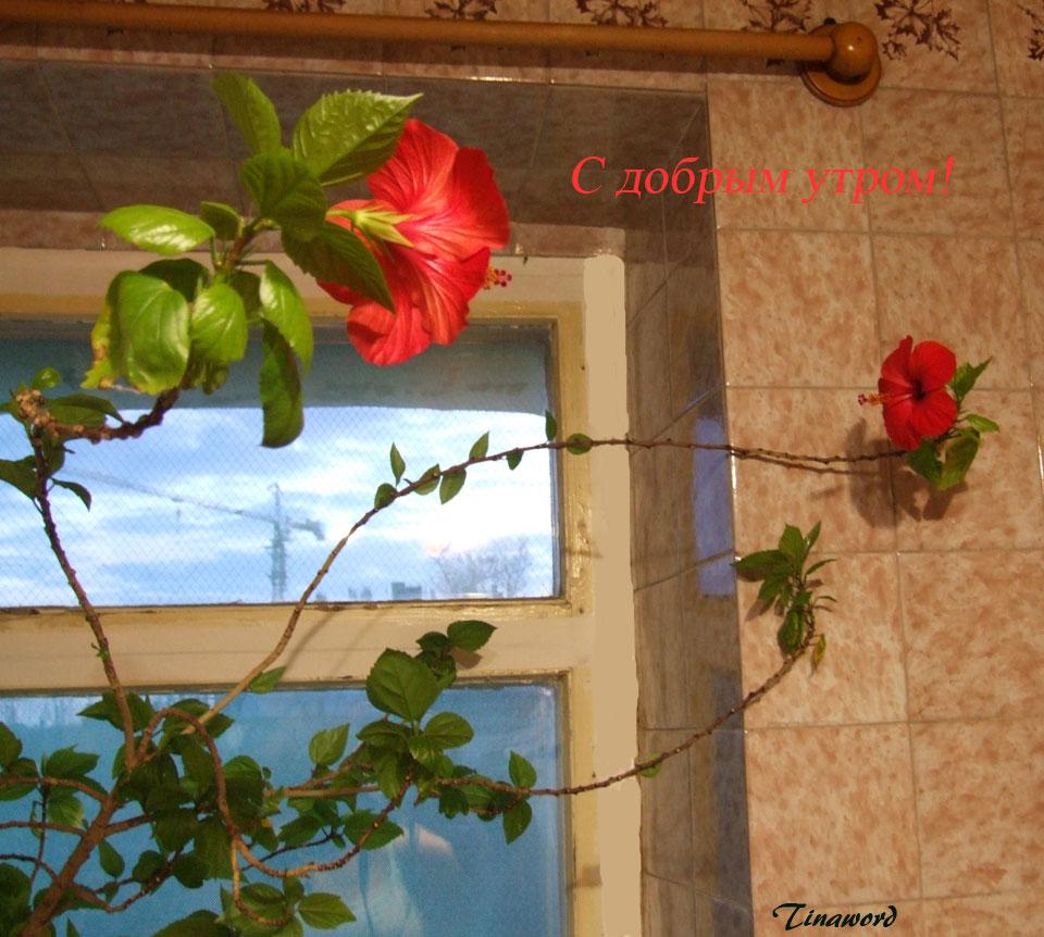 цветок-5.jpg