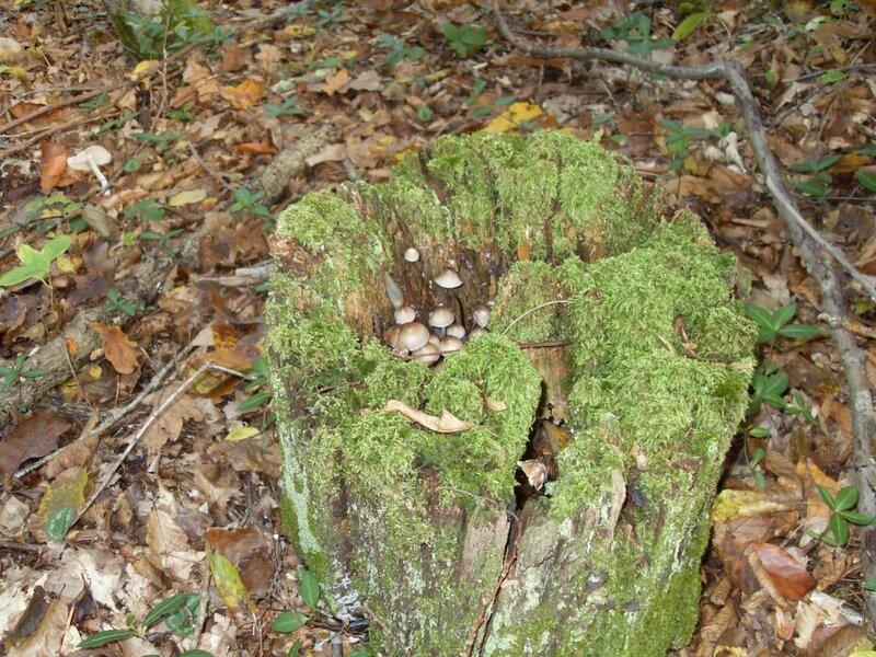 11  октября 2008, под Горячим Ключом, в лесу (15) .JPG