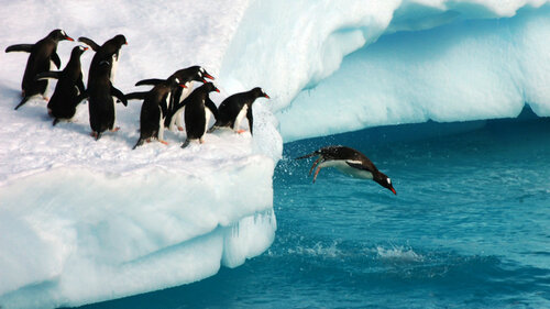 penguins-diving-ss-1920-800x450.jpg
