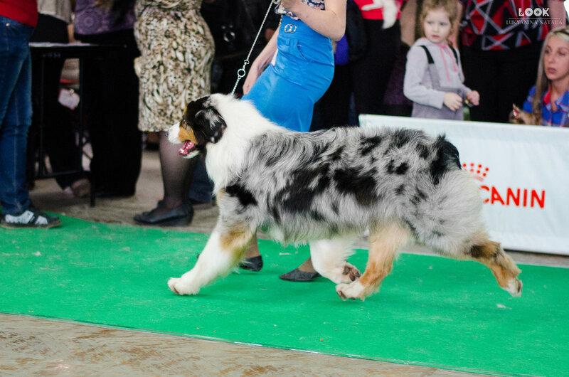 Выставочные успехи наших собак - 5 - Страница 27 0_a9283_5f10695d_XL