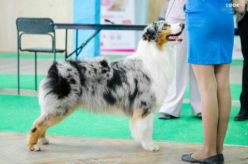 Выставочные успехи наших собак - 5 - Страница 27 0_a9284_fb5d278b_XL