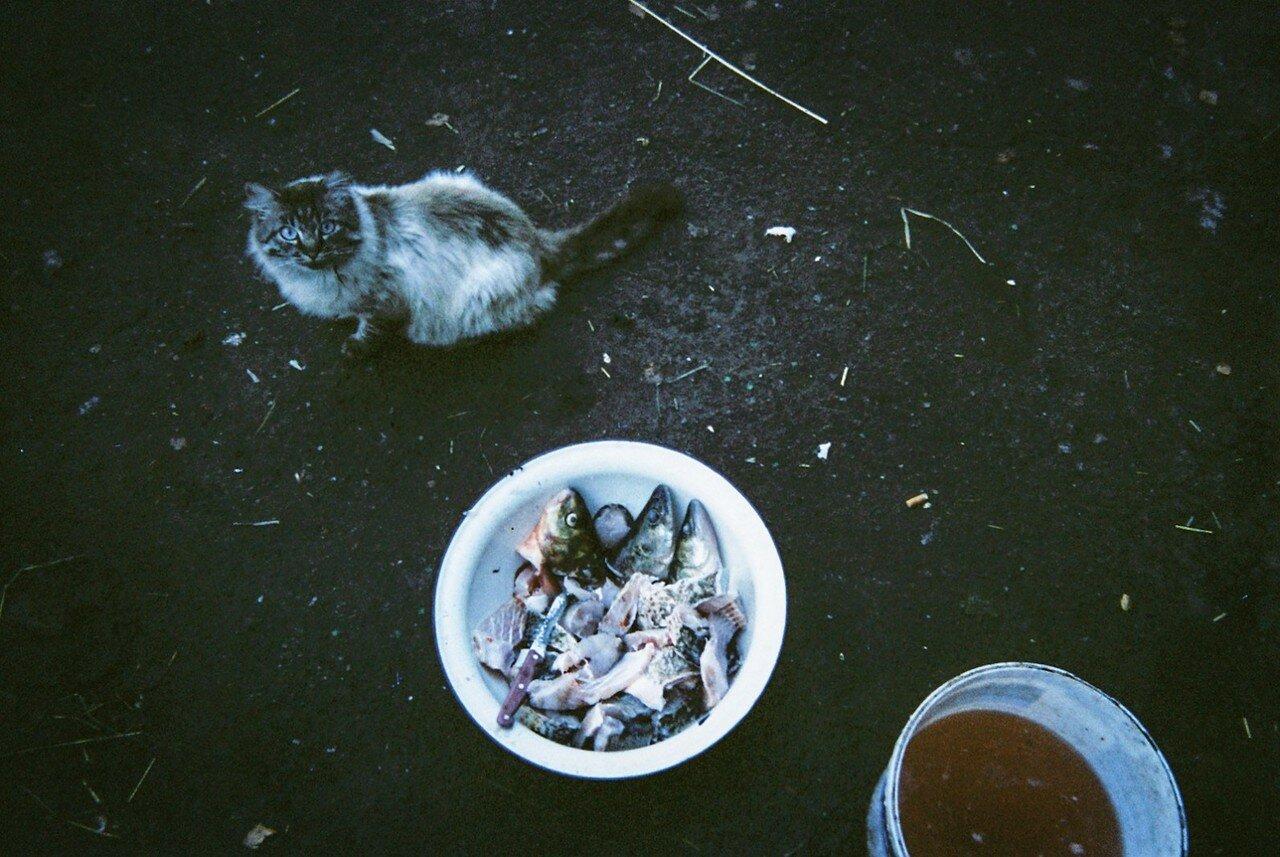Кошка возле чашки с рыбой,  выловленной из реки, протекающей мимо чернобыльской атомной станции