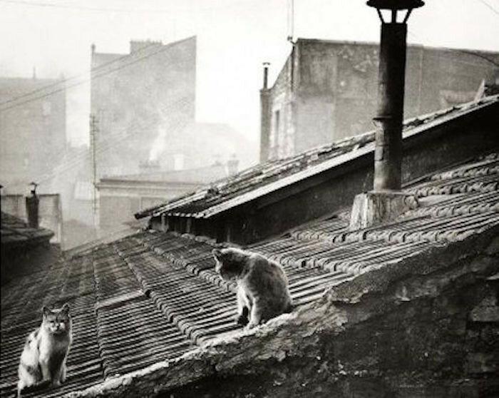 Парижские кошки