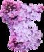 сирень цветы (15).png