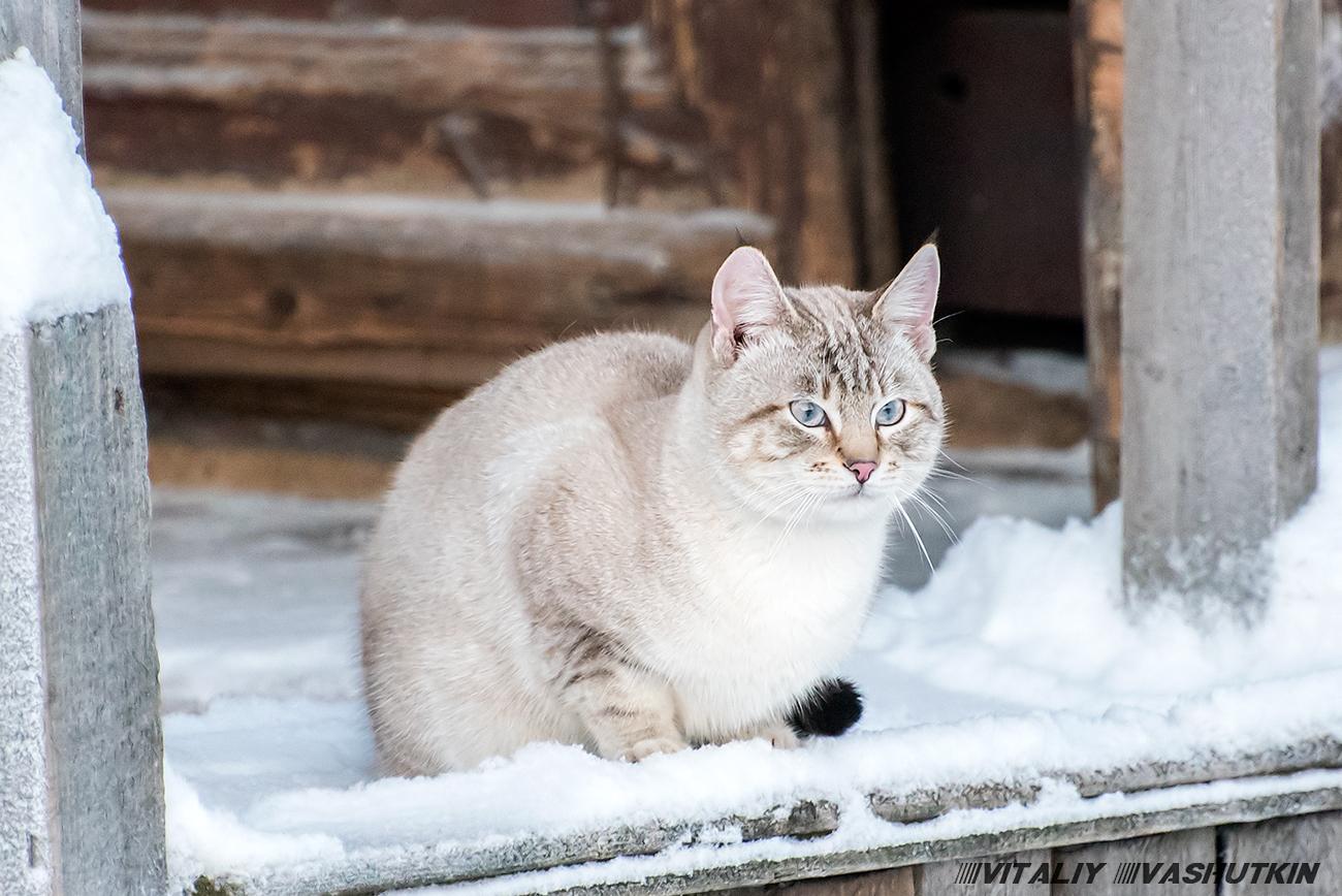Модная шкура - цвет снега в городе
