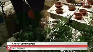 Полицейские в Молдове обнаружили нарко-оранжерею