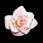 SweetShabby momentCollab_Cucciola_designs_11.png