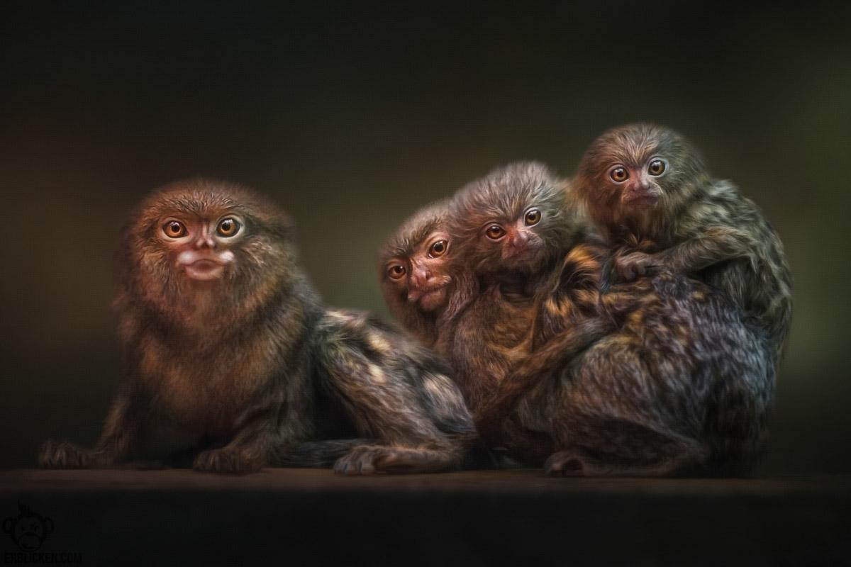 Family photo: Ma, Pa & Twins