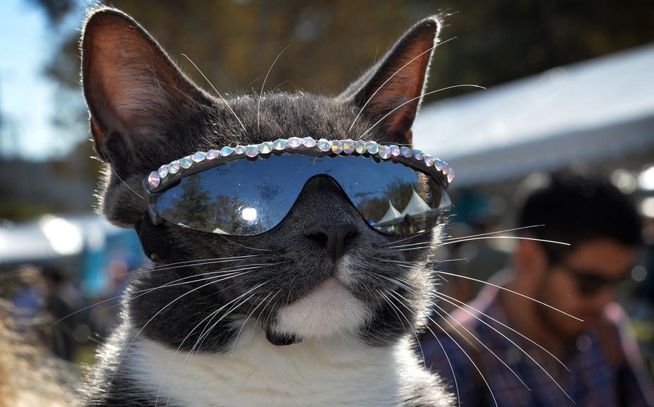 крутой кот