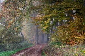 Осень в белые туманы лес хоронит по утрам