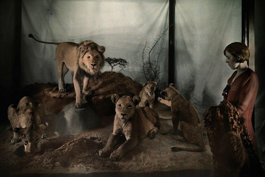 1931. США. Женщина смотрит на львов в Музее естественной истории в Вашингтоне, округ Колумбия