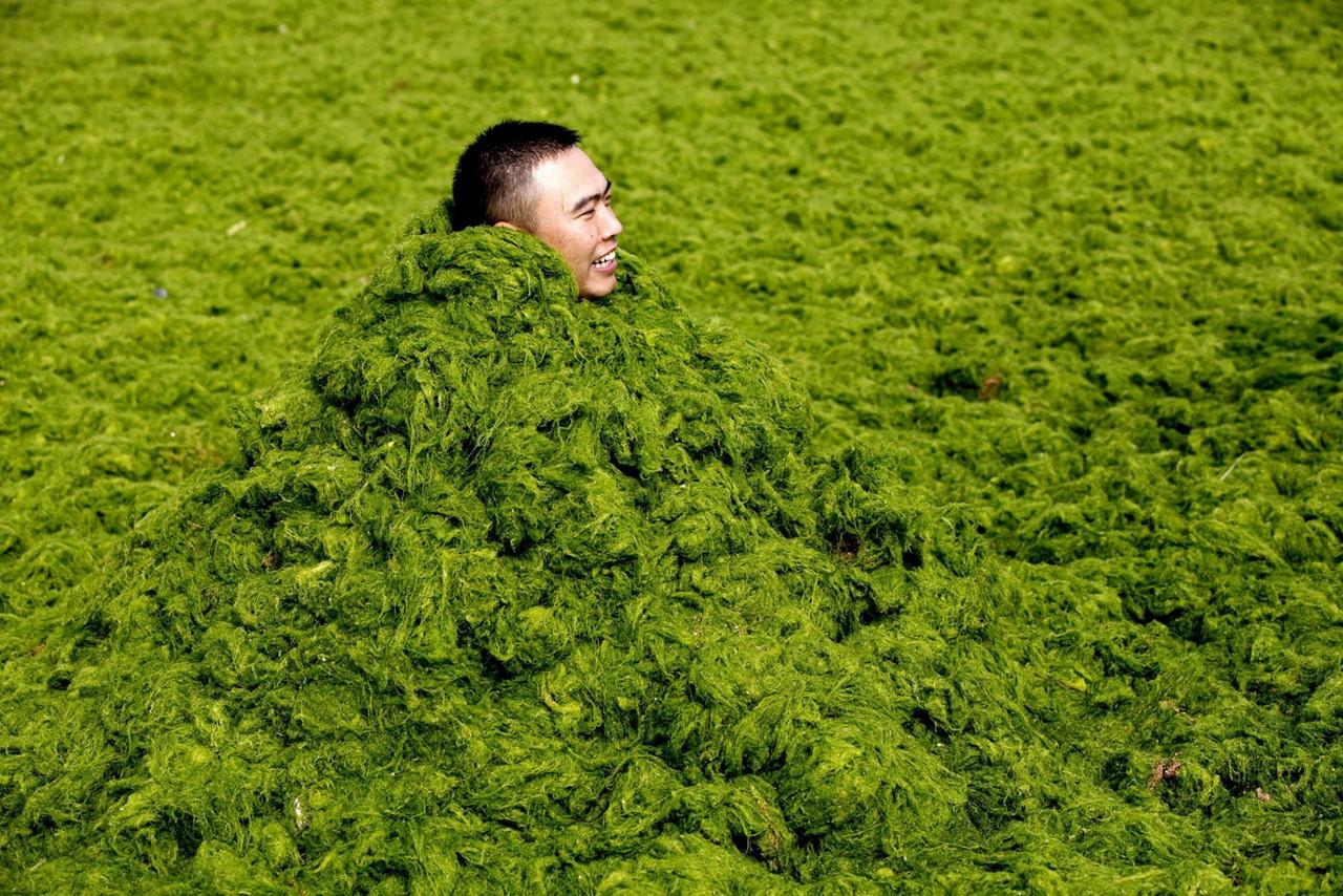 Почему зеленые водоросли атакуют Китай