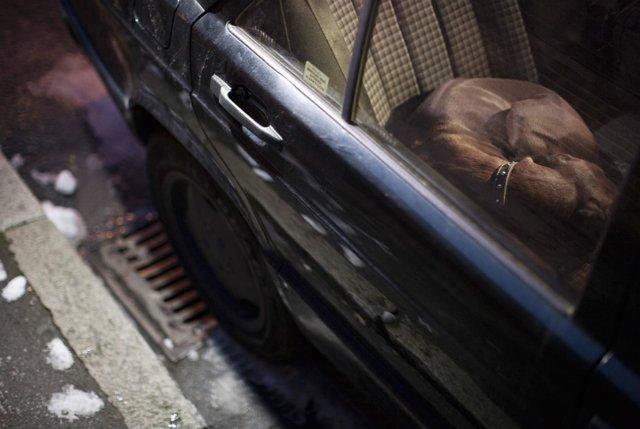 Фотопроект Мартина Асборна `The Silence of Dogs in Cars`.