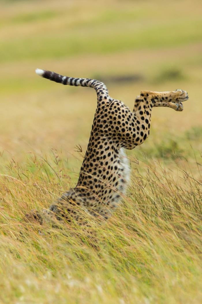 10. Леопард: «Отличайся от других!»