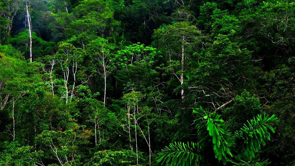 Тропический лес Амазонки , самый крупный тропический лес на Земле, является домом для 20% всех видов