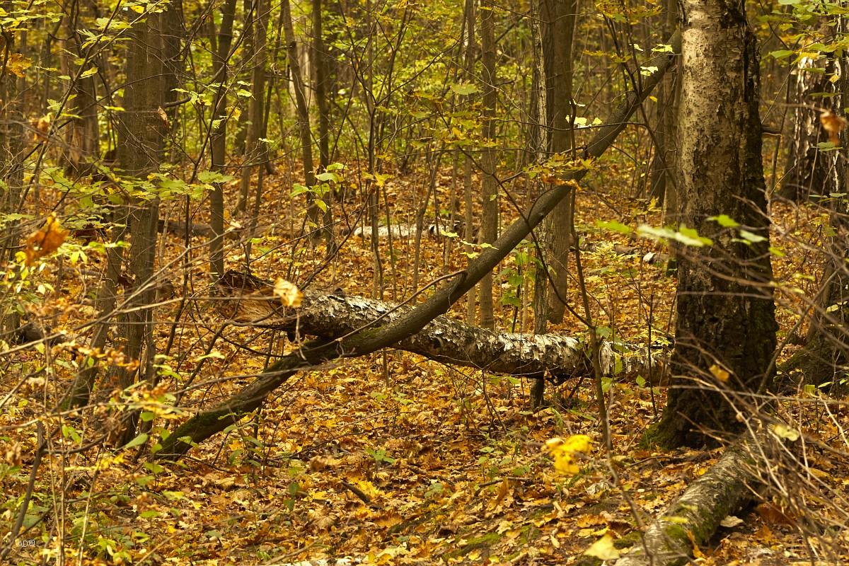 Тимирязевский лес