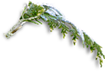 mzimm_snow_wonder_snowbranch3_sh.png
