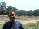 Лесные слоны.JPG