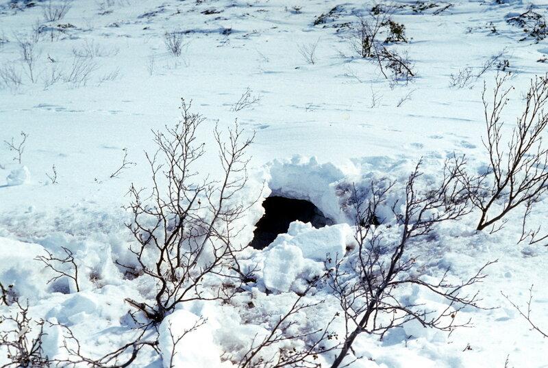 снежное убежище.jpg
