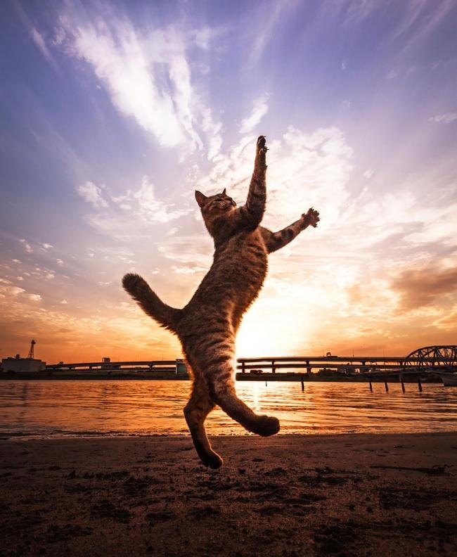 17 фотографий котов, сделанных в самый подходящий момент.