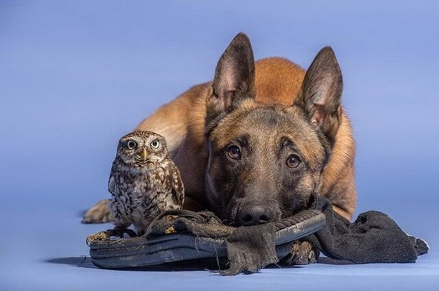 Дружба собаки и совенка