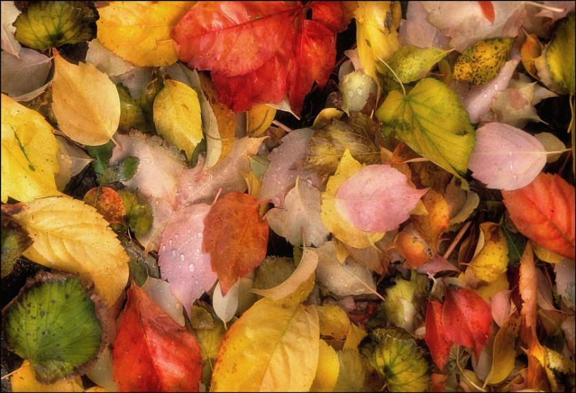 Осенние текстуры. Автор фото: Алессандро Ферретти