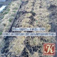 Книга Книга Преимущества и недостатки разных материалов для мульчирования почвы
