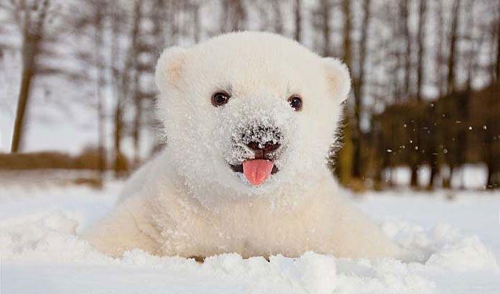 Первый снег в жизни животных