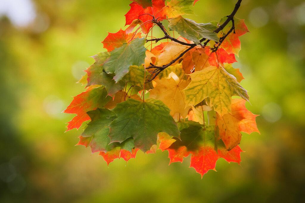 Осенний светофор...