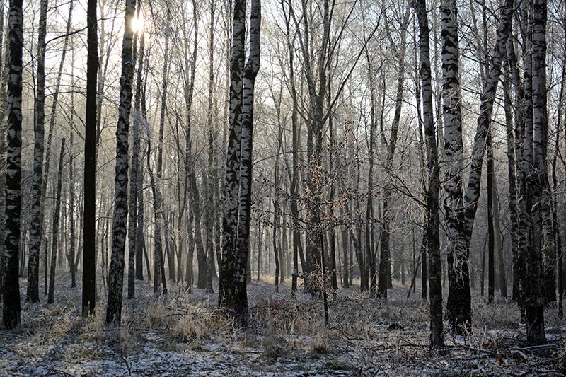 парк почти зима8