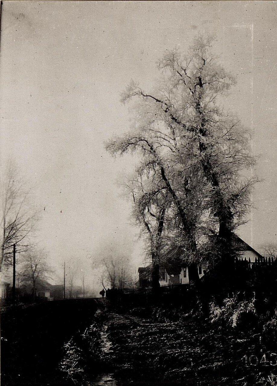 Иней на деревьях