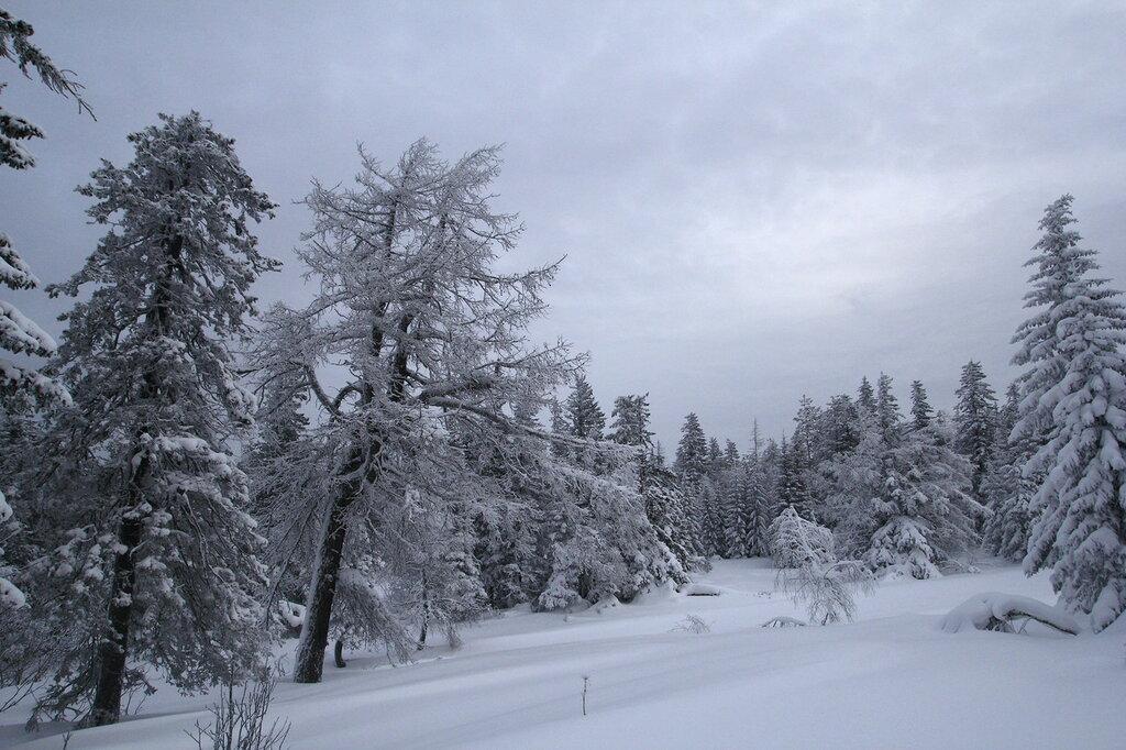 заснеженные деревья на Уреньге